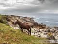 Cabalo nos Baixos da Tremosa