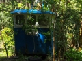 Bosque de Taboído