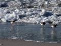 Playa de Laxe